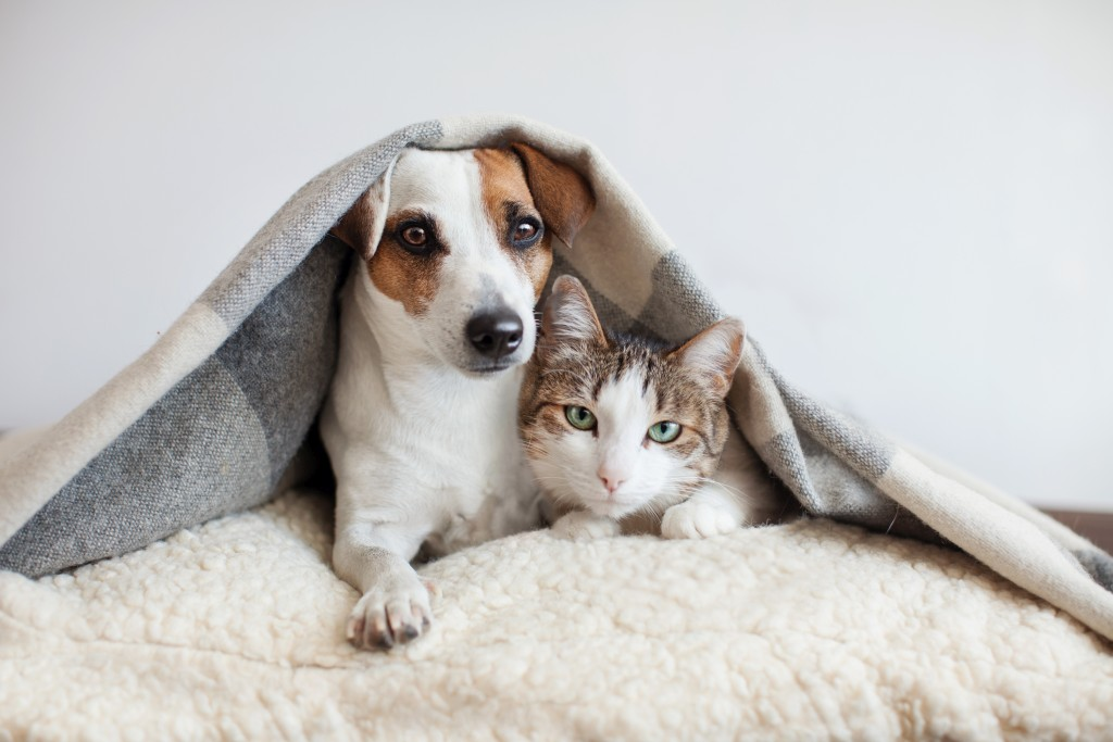 pet sitter for dogs and cats stockton lodi