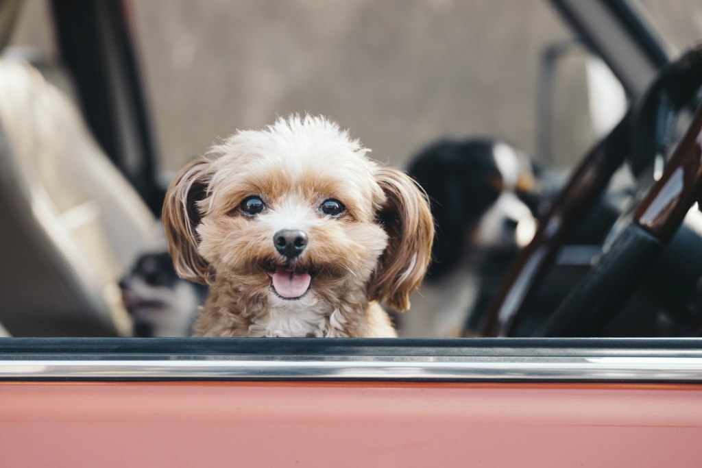 pet transportation stockton lodi